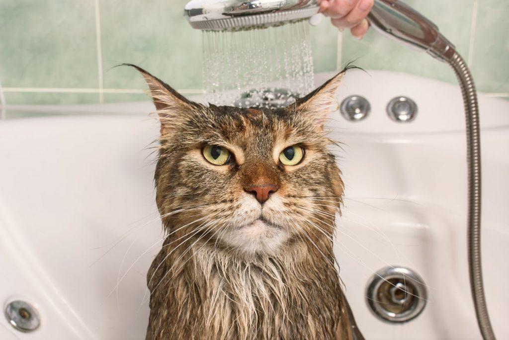 baie pisica