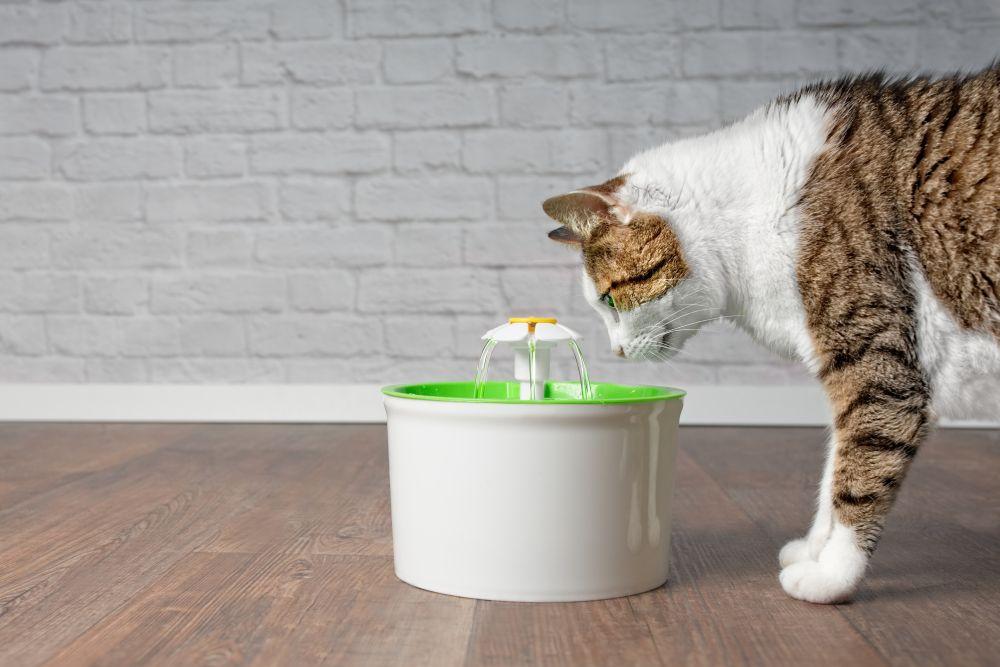 pisica bea apa