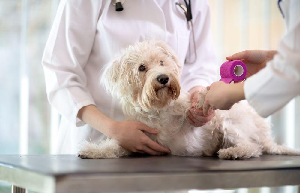maltez la veterinar