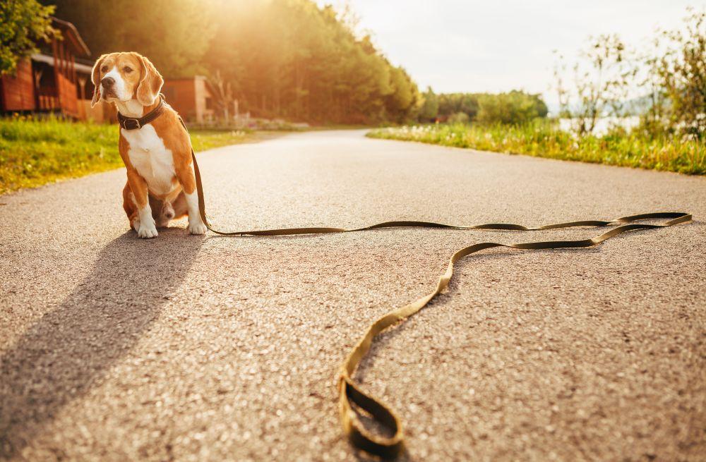 caine la plimbare