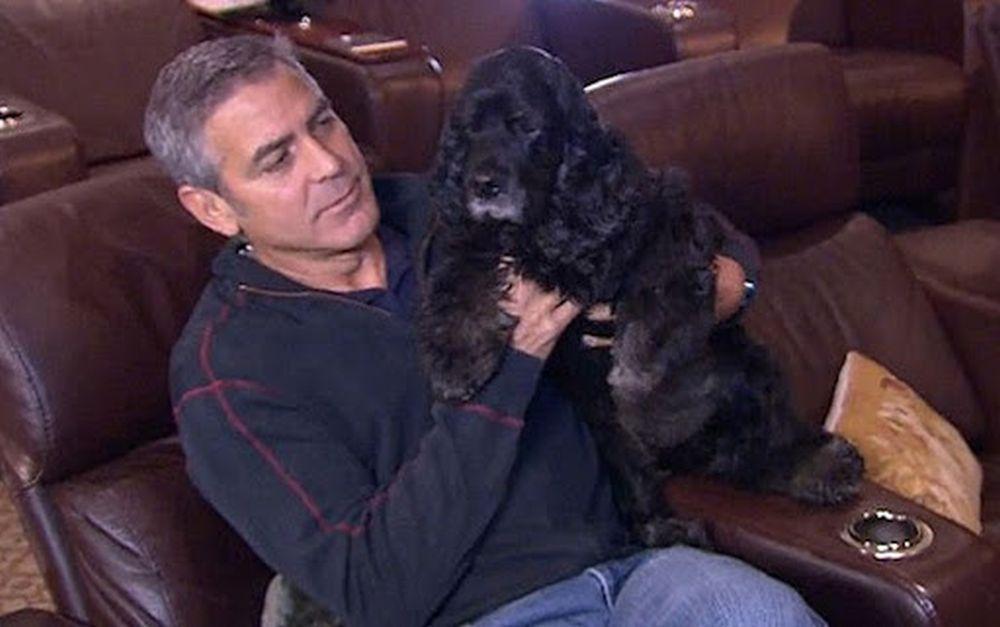 George Clooney einstein