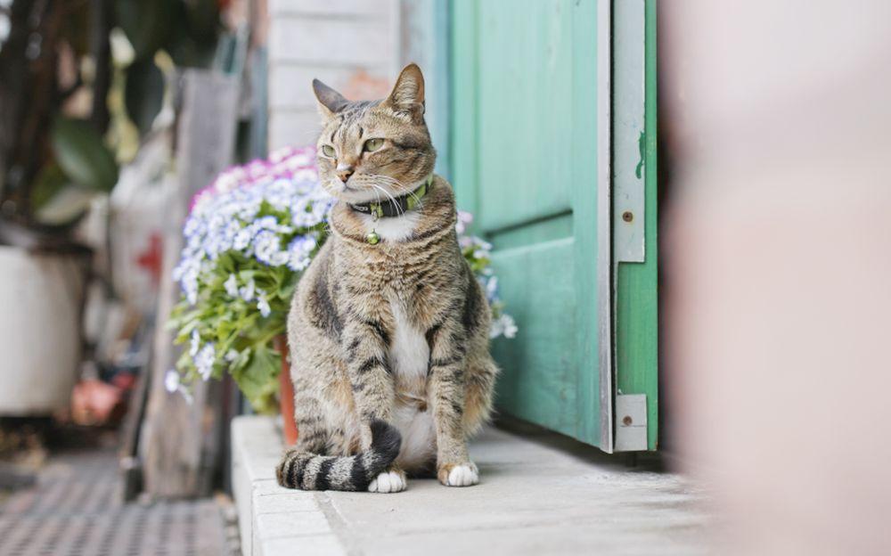 pisica singura