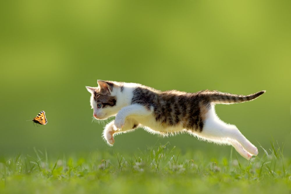 salt pisica