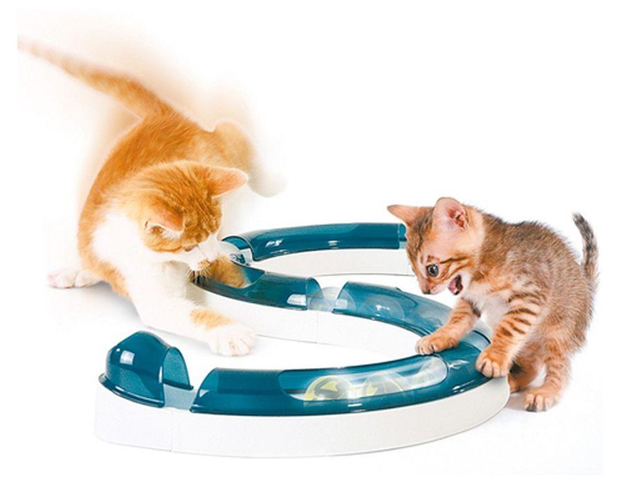 play circuit pisici