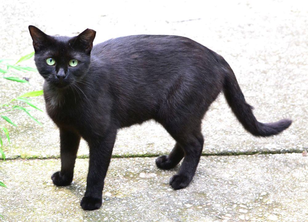 Blackie, cea mai bogată pisică din lume