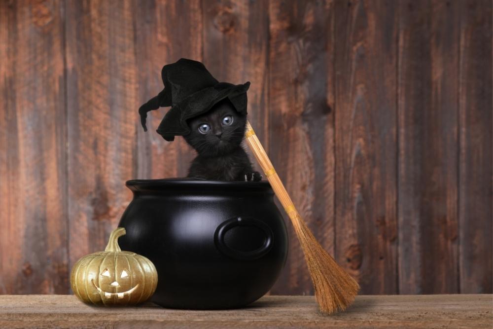 pisica neagra halloween