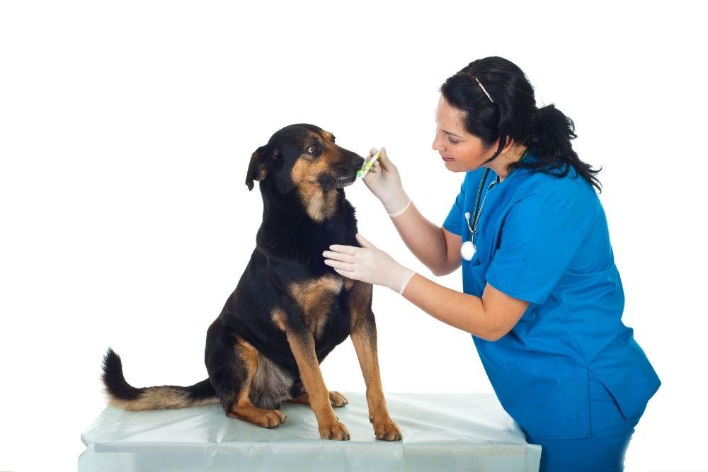 veterinar spalat dinti